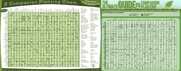 Companion Planting Tables